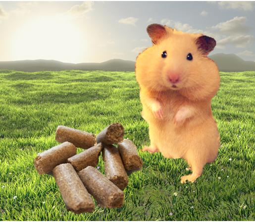 lost hamster