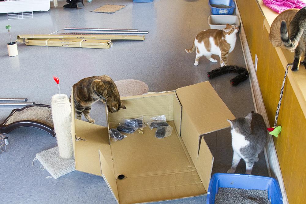 Animal Rescue Donation