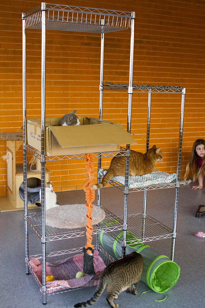 Animal Rescue - Cat Play Room