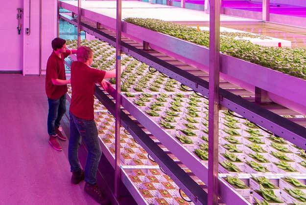 Urban Farm Inside Warehouse
