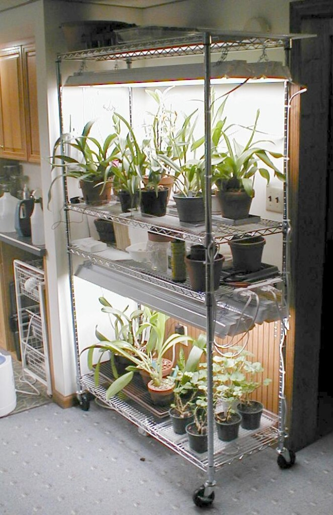 Wire Shelving Plants Growing