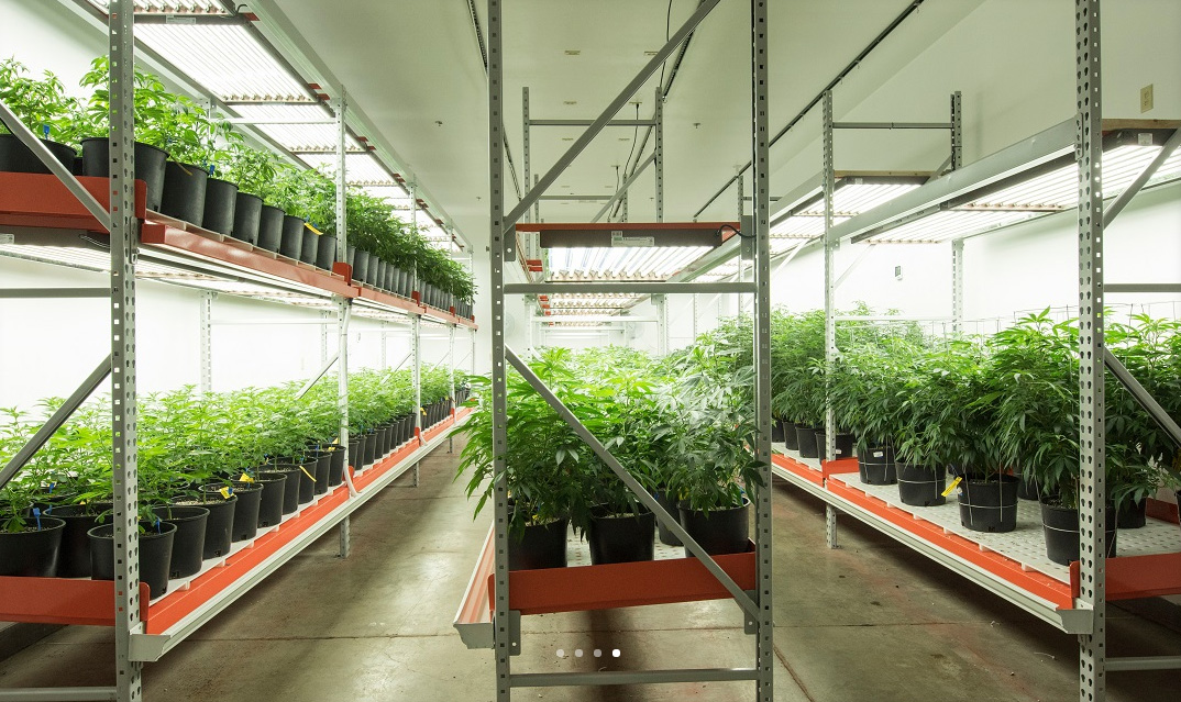 Medical marijuana dispensary design organization the for What does terrace farming mean